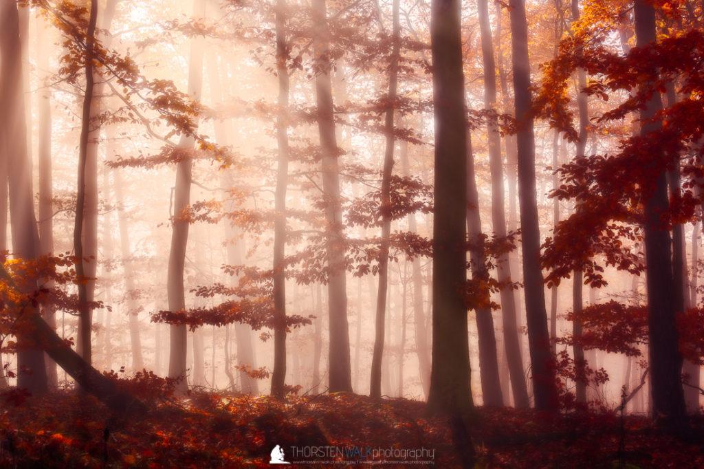 Hohenberg - Sonnenstrahlen im Wald