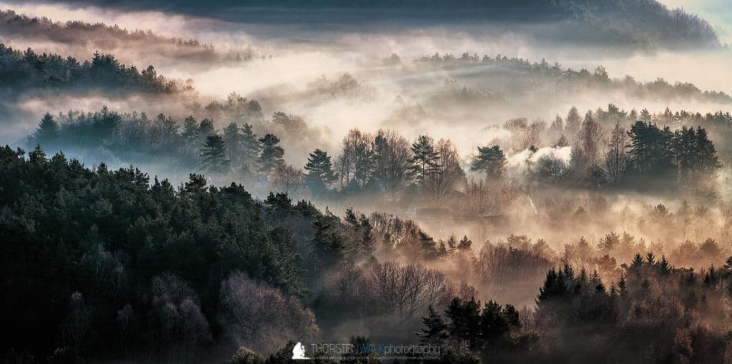 Nebel im Pfälzer Wald