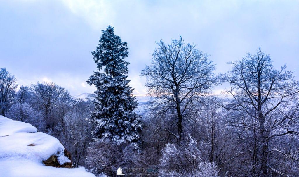 Winter auf der Wegelnburg