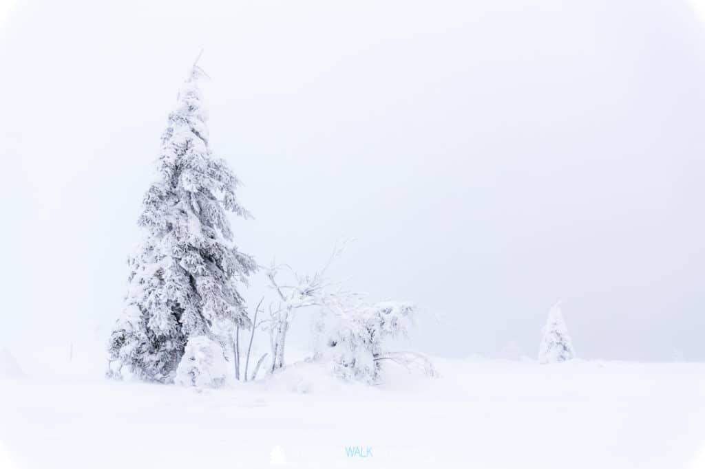 TWF_20171209_Schwarzwald_011